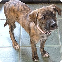 Adopt A Pet :: TATUM - Paron, AR