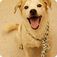 Adopt A Pet :: Kota - Pocahontas, AR