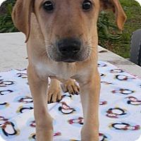 Adopt A Pet :: Tanner - Floresville, TX