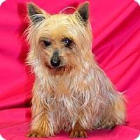 Adopt A Pet :: Little Debbie - Canton, IL