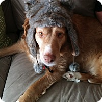 Adopt A Pet :: Skylar - Elk River, MN