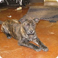 Adopt A Pet :: Ted - Charlemont, MA
