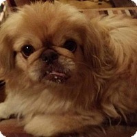Adopt A Pet :: CAMILA - SO CALIF, CA