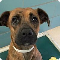 Adopt A Pet :: Canella - Fort Lauderdale, FL