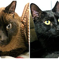 Adopt A Pet :: Mika & Midnight - Forked River, NJ