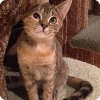 Adopt A Pet :: Breeze - Apex, NC