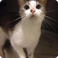 Adopt A Pet :: Jaime - Gainesville, FL