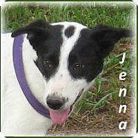 Adopt A Pet :: Jenna - Marlborough, MA