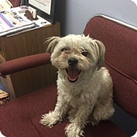 Adopt A Pet :: Sissy - Jupiter, FL