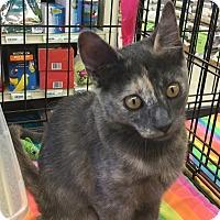 Adopt A Pet :: Jill - Gilbert, AZ