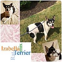 Adopt A Pet :: Izabella - Fort Wayne, IN