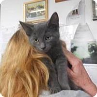 Adopt A Pet :: Joey - Belleville, MI