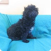 Adopt A Pet :: Aubree - Ridgway, CO