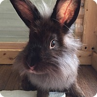 Adopt A Pet :: Olea - Watauga, TX