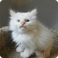Adopt A Pet :: Lily - Davis, CA
