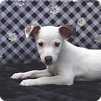 Adopt A Pet :: Jasmine - East Sparta, OH