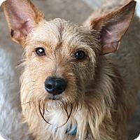 Adopt A Pet :: Wally - Woonsocket, RI
