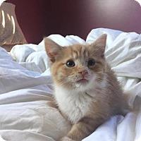 Adopt A Pet :: Benji - Nesquehoning, PA