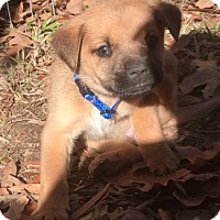 Adopt A Pet :: <3 PUPPY 4 <3 - Sylacauga, AL