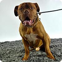 Adopt A Pet :: Hiks - Goodyear, AZ