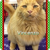 Adopt A Pet :: Vincenzo - Atco, NJ