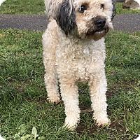 Adopt A Pet :: Ricky - Tumwater, WA