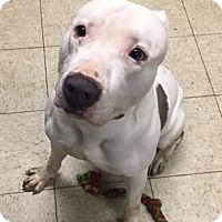 Adopt A Pet :: Lexington - Cleveland, OH