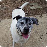 Adopt A Pet :: Junior - Aurora, IL