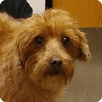 Adopt A Pet :: Wade - Palmdale, CA