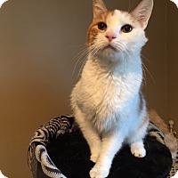 Adopt A Pet :: Sparky - Wayne, NJ
