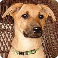 Adopt A Pet :: Milo - Gilbert, AZ