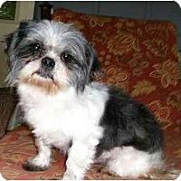 Adopt A Pet :: Ross - Mooy, AL