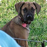 Adopt A Pet :: VINNY - Torrance, CA