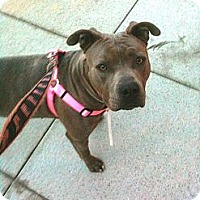 Adopt A Pet :: Princess - Santa Monica, CA