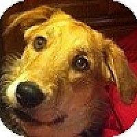 Adopt A Pet :: Sugar - Hamilton, ON