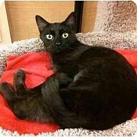 Adopt A Pet :: Darcy - Irvine, CA