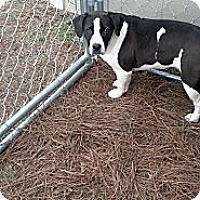 Adopt A Pet :: Dozer - Woodlawn, TN