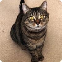 Adopt A Pet :: Eddie - Vancouver, BC
