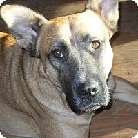Adopt A Pet :: Austin - Newport, VT