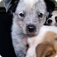 Adopt A Pet :: Canberra - Gainesville, FL