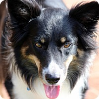 Adopt A Pet :: SASHA - San Pedro, CA