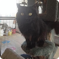 Adopt A Pet :: Harry - Caistor Centre, ON