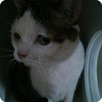 Adopt A Pet :: Valentino - Caistor Centre, ON