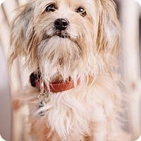 Adopt A Pet :: Darla - Portland, OR