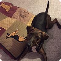 Adopt A Pet :: Charlie - Schaumburg, IL