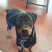 Adopt A Pet :: Max - Rexford, NY