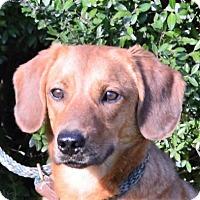 Adopt A Pet :: **BAXTER** MEET FEB 13TH! - Mukwonago, WI