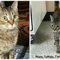 Adopt A Pet :: Mims - Siler City, NC