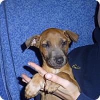 Adopt A Pet :: Kiera - Oviedo, FL