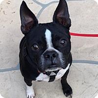 Adopt A Pet :: Hamiliton - Scottsdale, AZ